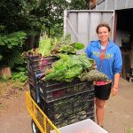 Antioch College student harvests vegetables