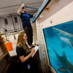 New College of Florida students observe sharks in a tank